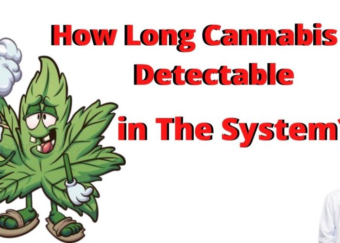 How Long Cannabis is Detectable in The System?